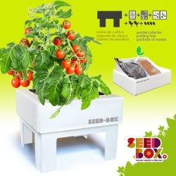 seedbox-cultivame-tomate-cherry